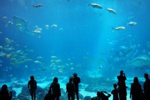 Phuket Akvarium